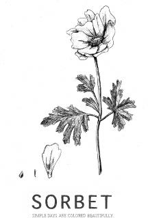 anemone-web2.jpg